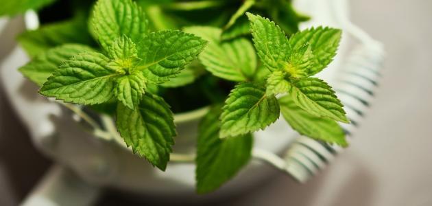 التخلص من رائحة الفم بالأعشاب