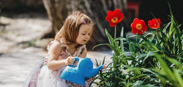 المحافظة على حديقة المنزل