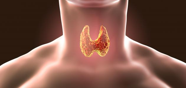 ارتفاع الأجسام المضادة للغدة الدرقية