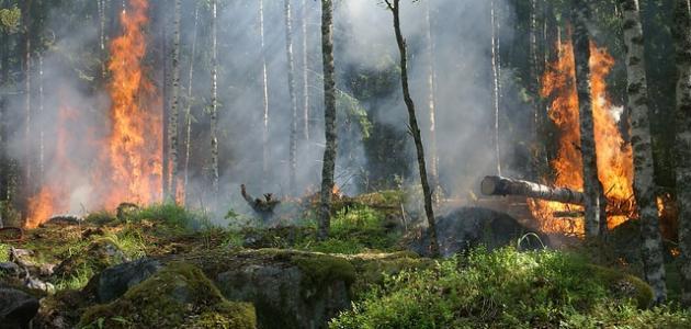 آثار حرائق الغابات