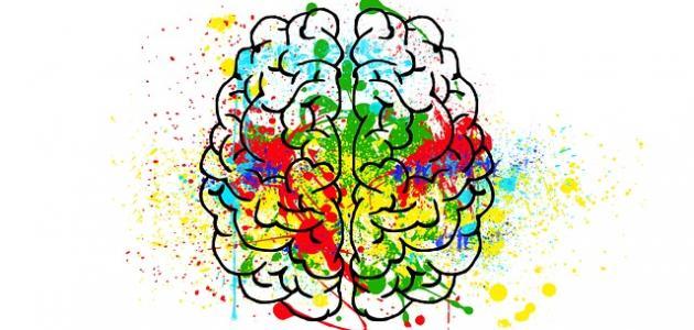 أهم النظريات في علم النفس