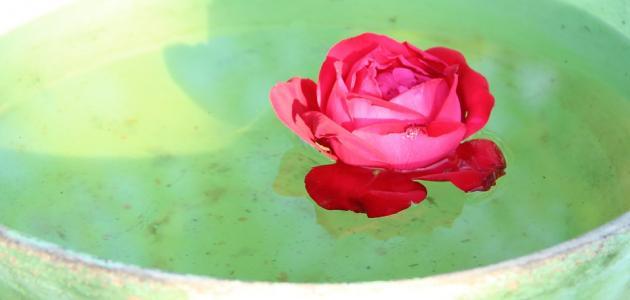 فوائد الورد للبشرة