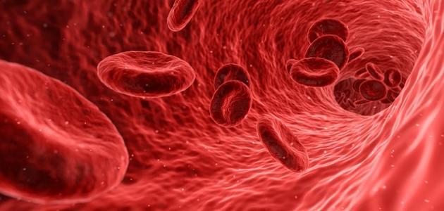 أعراض التهاب بالدم