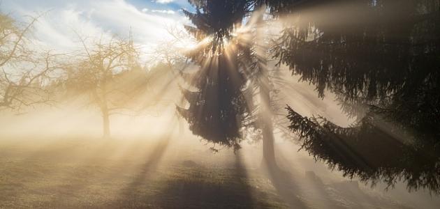 أهمية الضوء في حياتنا