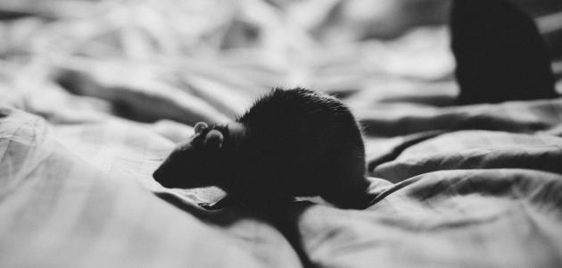 التخلص من الفئران بالأعشاب