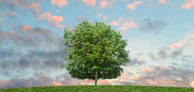 اليوم الوطني للشجرة