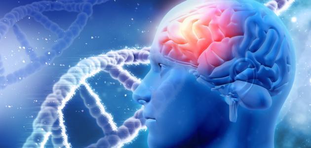 أورام الدماغ الخبيثة