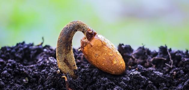 مظاهر نمو الكائنات الحية