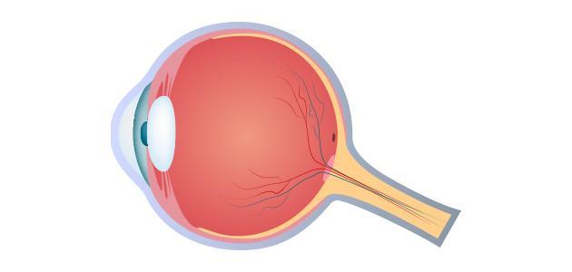 أول عالم شرح تركيب العين