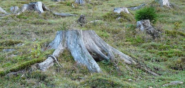 آثار إزالة الغابات