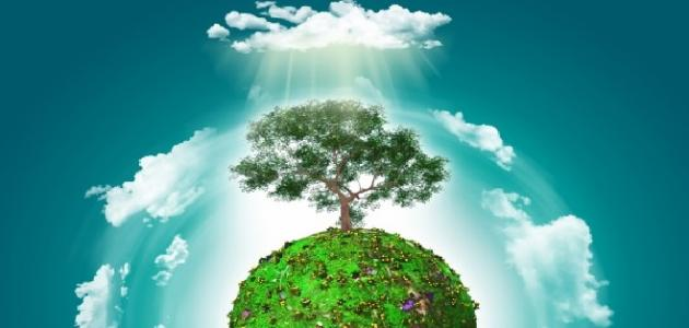 أهمية التشجير في تحسين البيئة