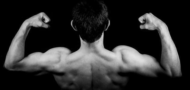 أهمية الجهاز العضلي