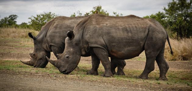 بحث عن كيفية حماية الحيوانات من الانقراض
