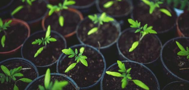 من أسهل النباتات في زراعتها