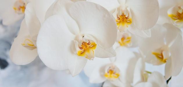 أجمل الزهور