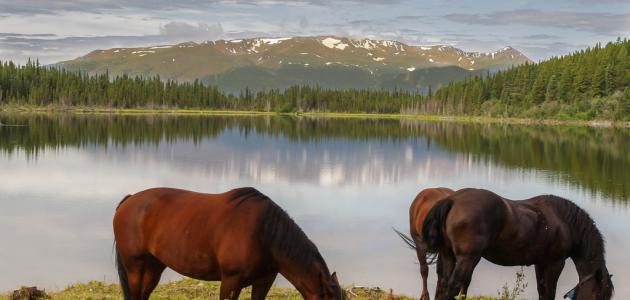 ما المكان الذي يعيش فيه الحصان