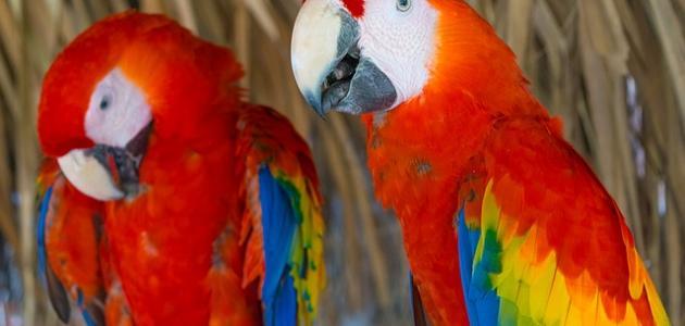 أجمل الطيور والحيوانات