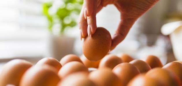 ماسك صفار البيض للوجه