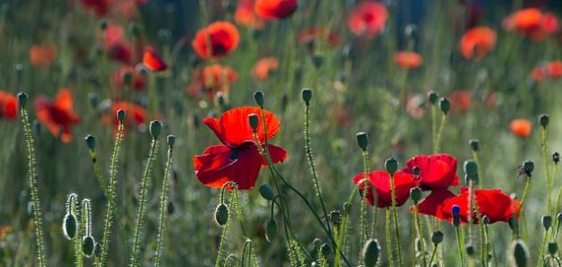 أجمل الزهور الطبيعية في العالم