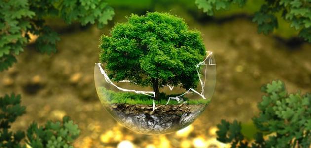 بحث عن نظافة البيئة وأهميتها