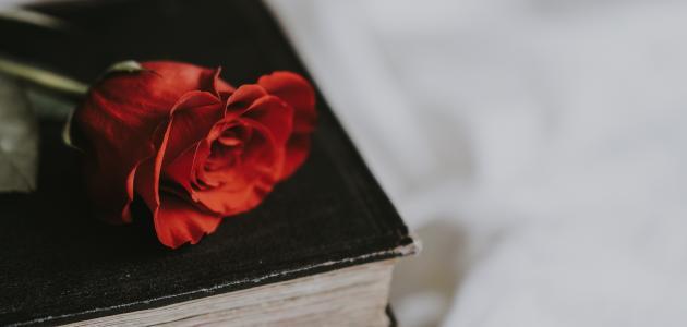 أجمل قصائد الحب والغزل
