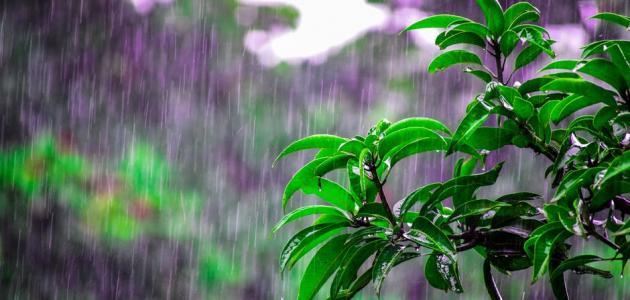 أجمل العبارات عن المطر