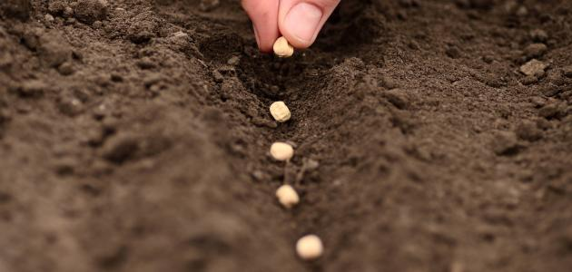 كيفية غرس البذور