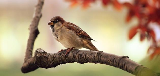 أشعار عن الطيور