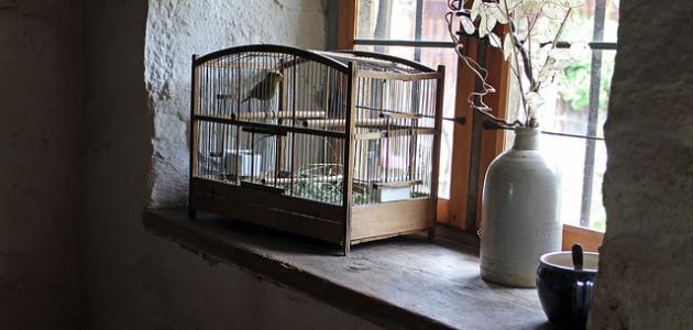 التخلص من رائحة الطيور في المنزل
