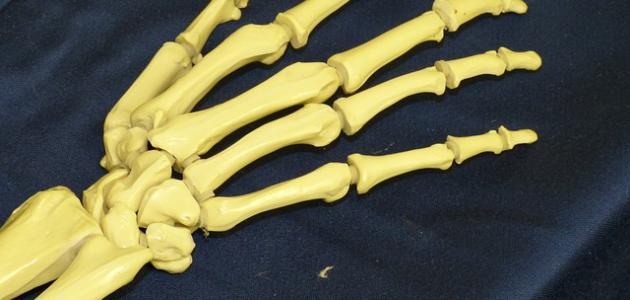 كيفية زيادة كثافة العظام