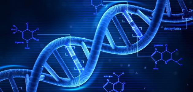 كيف يتم تحليل DNA