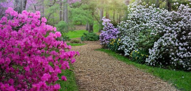 قصيدة عن الربيع