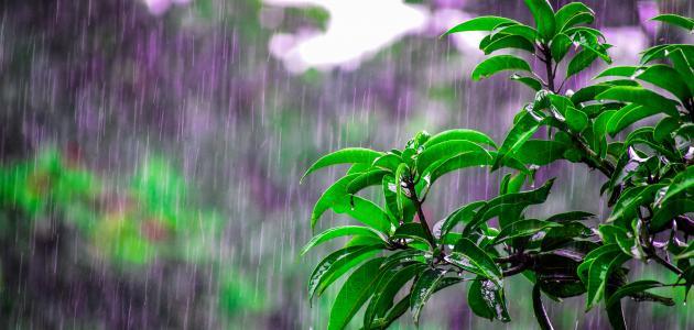 حكم عن المطر