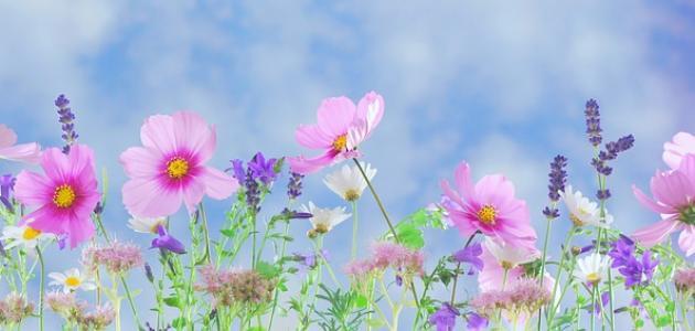 قصيدة عن الربيع قصيرة