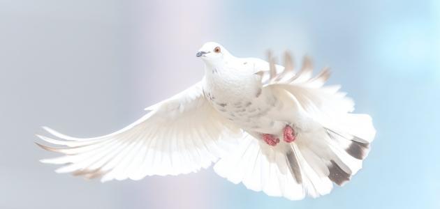 أقوال وحكم عن السلام