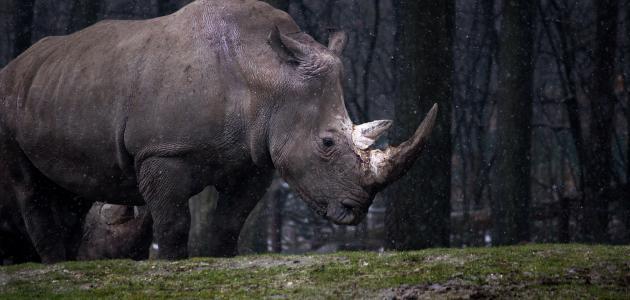 اسم آخر يطلق على وحيد القرن