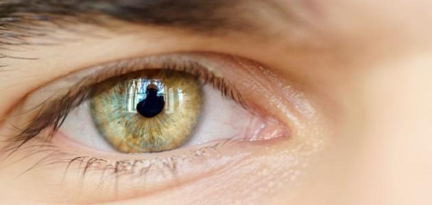 طبقات شبكية العين