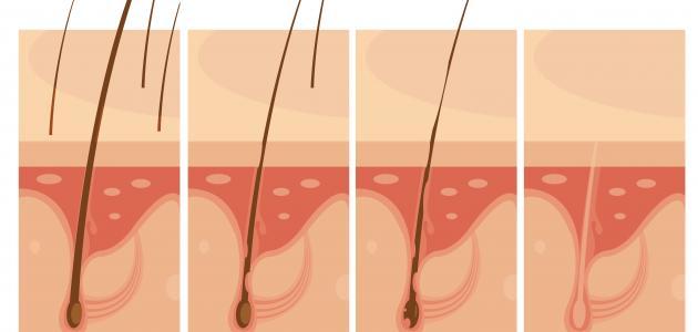 اسم سطح الطبقة الداخلية للجلد