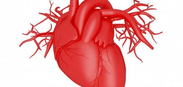 ما هي مكونات القلب