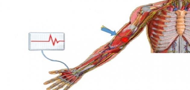 كيف يعمل الجهاز العصبي