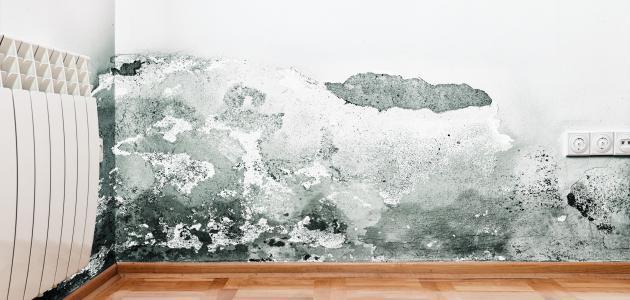 كيف تتخلص من رطوبة الجدران