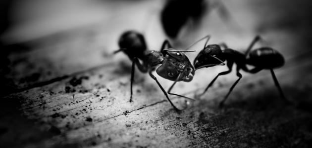 تخلص من النمل المنزل
