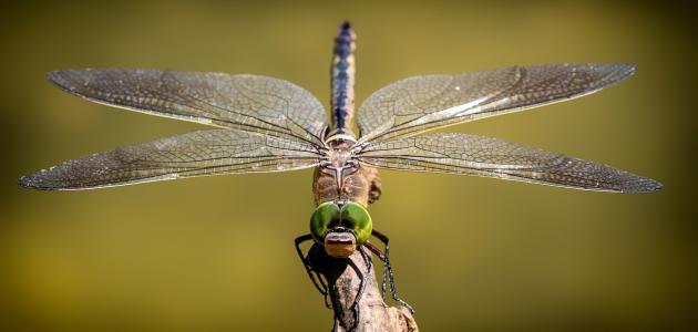 أسرع أنواع الحشرات