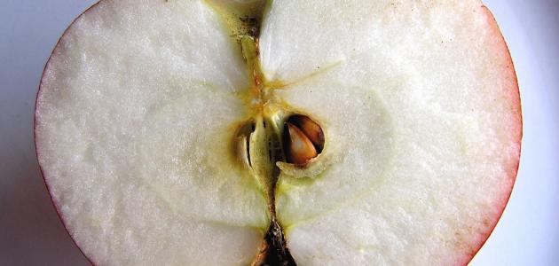 كيفية زراعة بذور التفاح