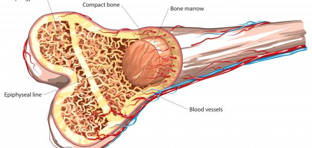 أورام النخاع العظمي