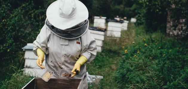 تربية النحل للمبتدئين