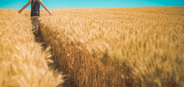 بحث عن الريف