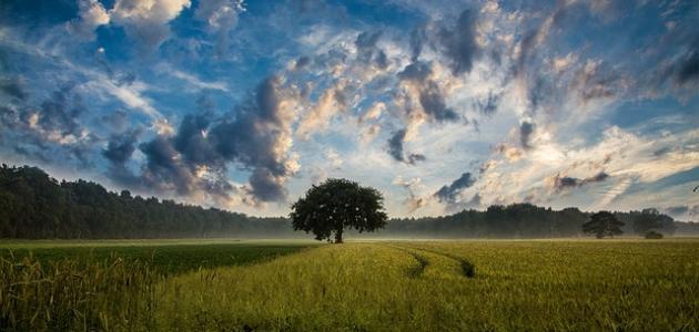 حكم عن الشجرة
