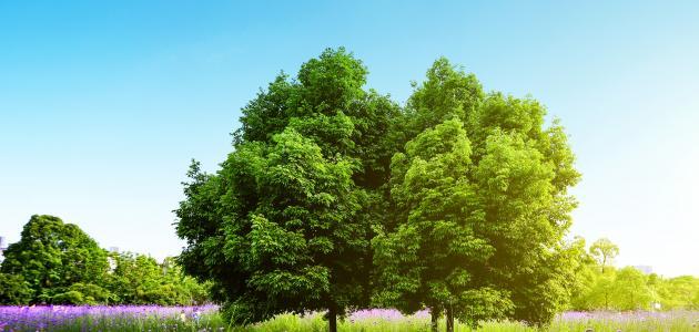 تاريخ اليوم العالمي للشجرة