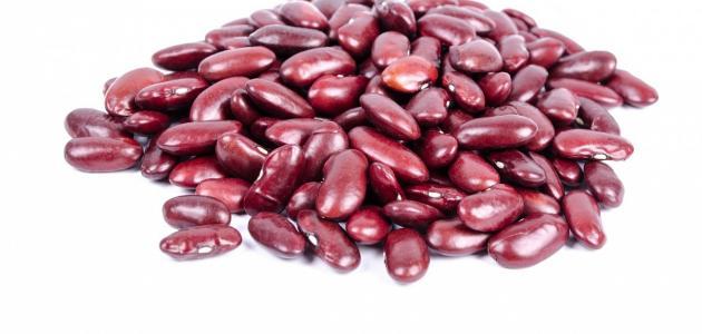 مراحل نمو بذرة الفاصولياء